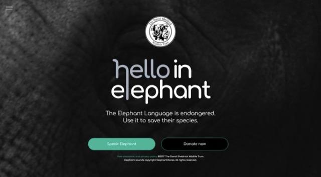 Hello in Elephant.jpg