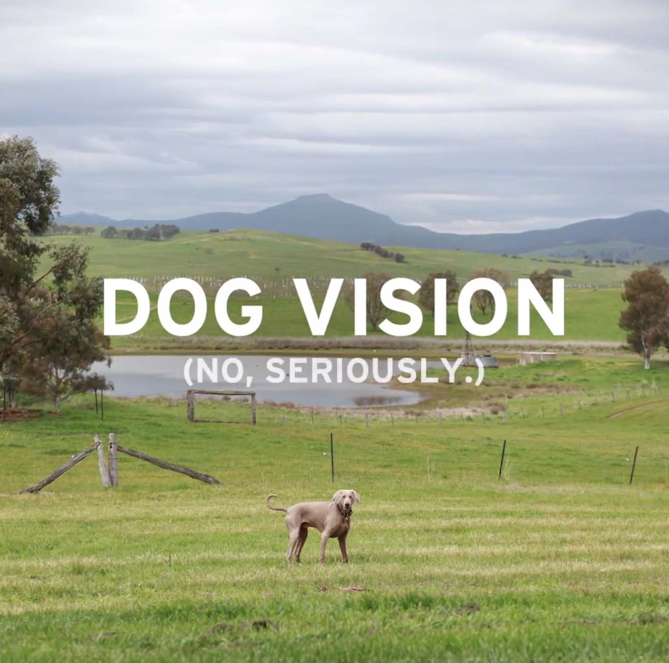 DOG-VISION-1.jpg