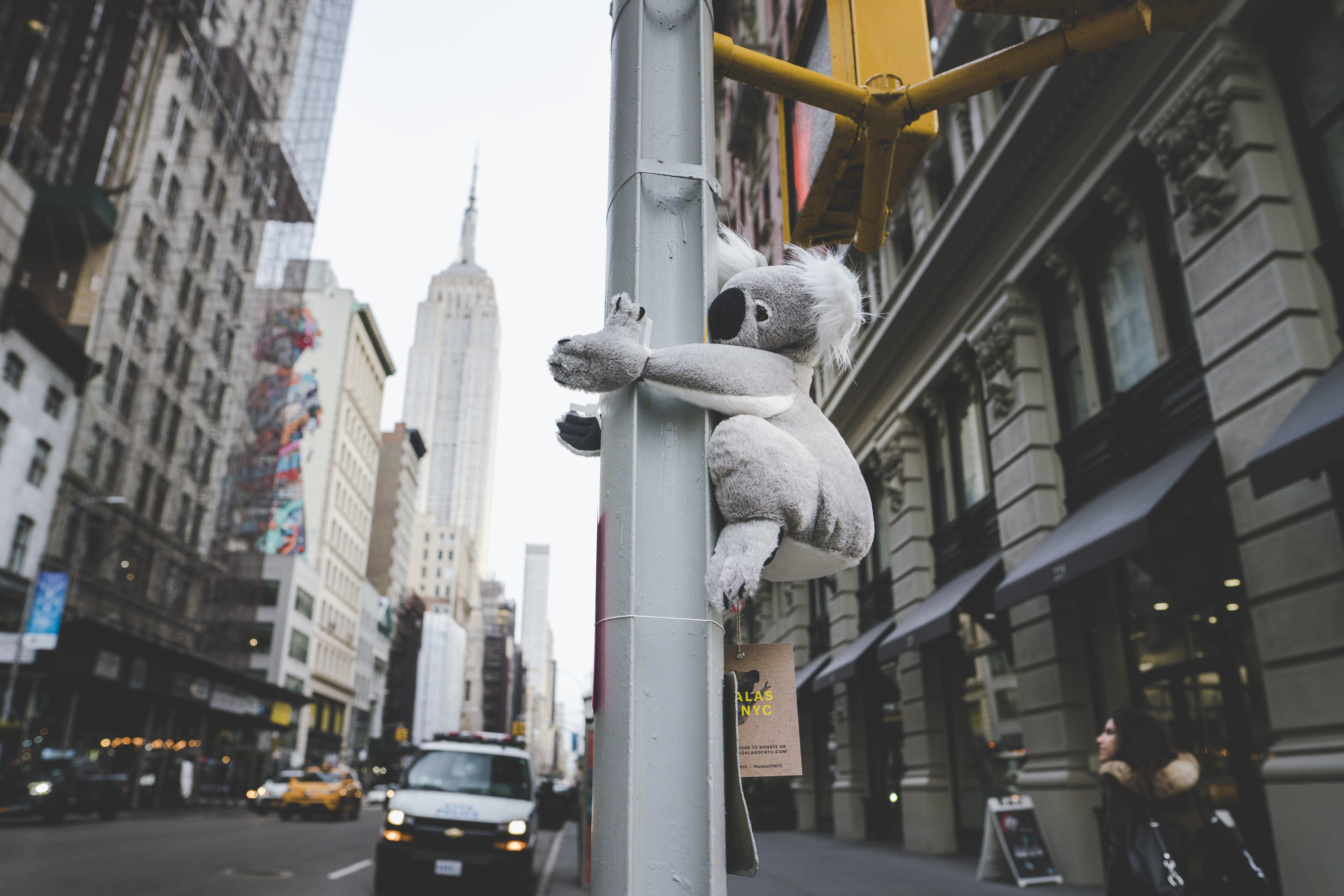Cummins&Partners NYC takes action to help furry friends in Australia with @koalasofnyc