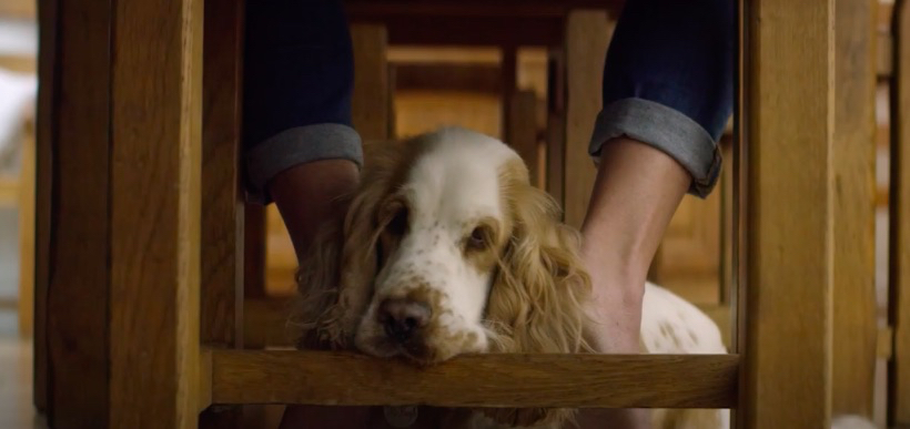 Black Hawk + VitaPet say thanks to four legged fur workers in social campaign via The Works