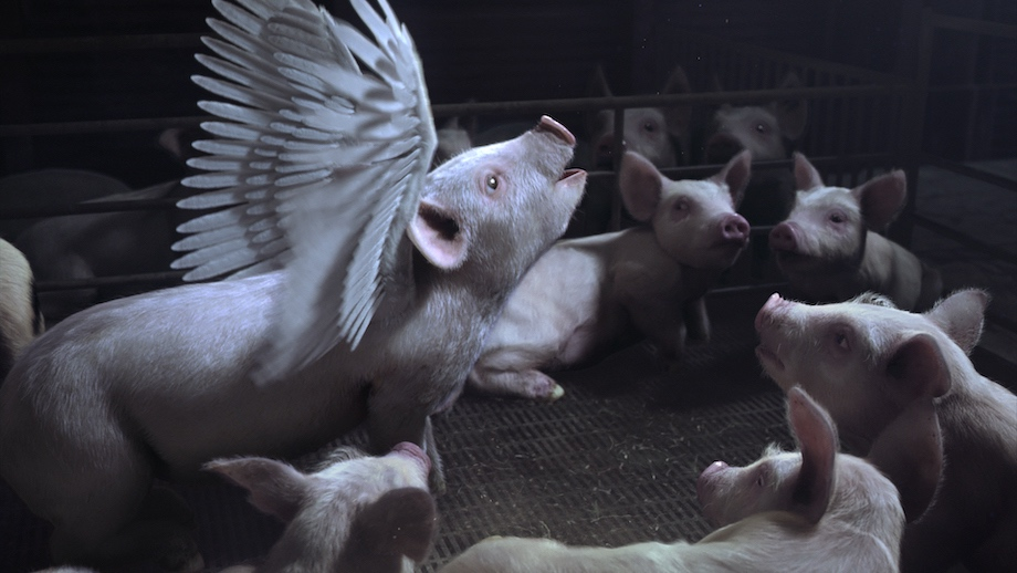Animals Australia takes flight in new emotional campaign via VANDAL