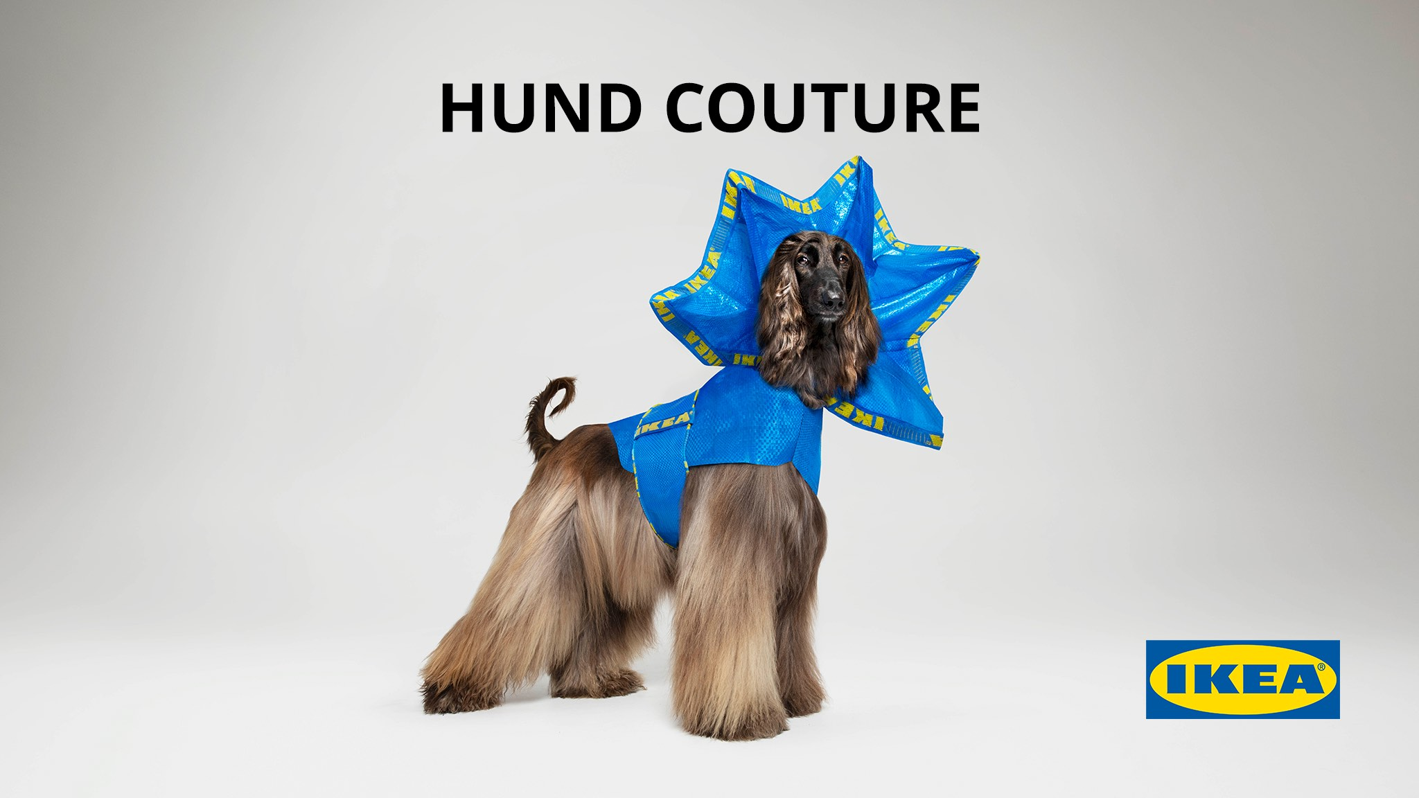 IKEA launches HUND COUTURE for dogs in April Fools' Day campaign via CHE Proximity