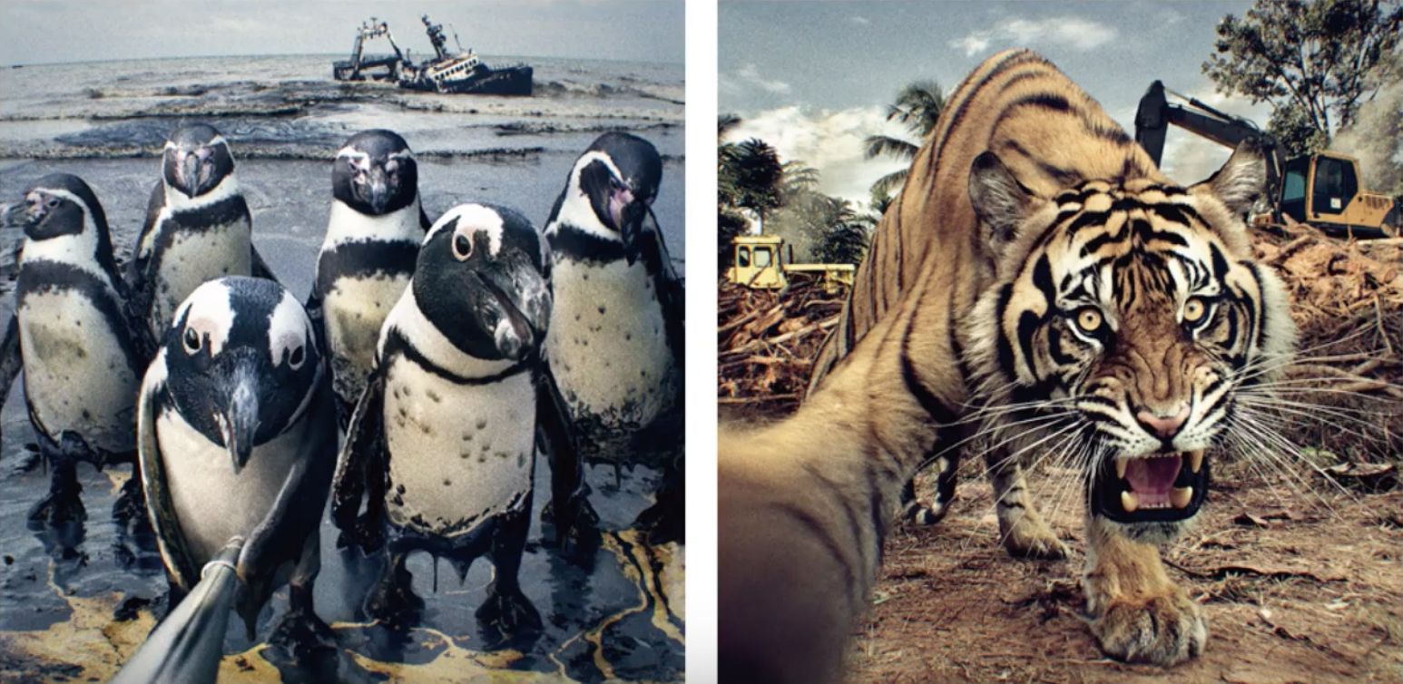 Animal selfies come to the rescue in WWF Japan campaign via ADK Creative One Japan/CHERRY