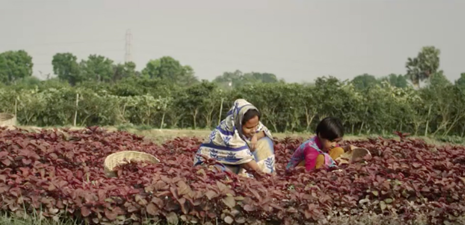 United Commercial Bank and Grey Bangladesh's initiative transforms fresh fruits and vegetables into bank accounts powered by Shwapno