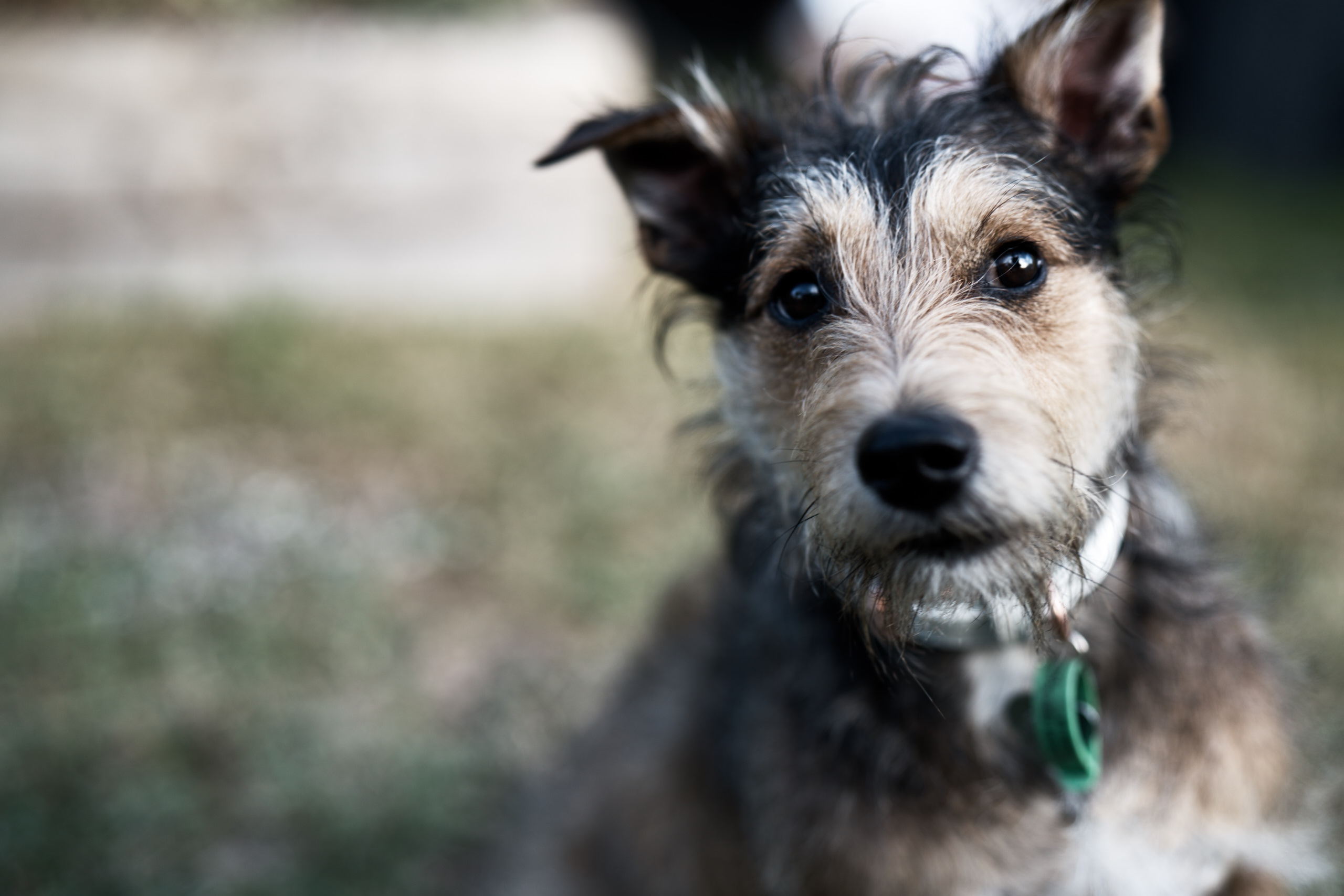 DDB LAUNCHES CAMPAIGN FOR NEW ZEALAND'S NEWEST CHARITY PET REFUGE; HITS FUNDING TARGET IN 7 DAYS