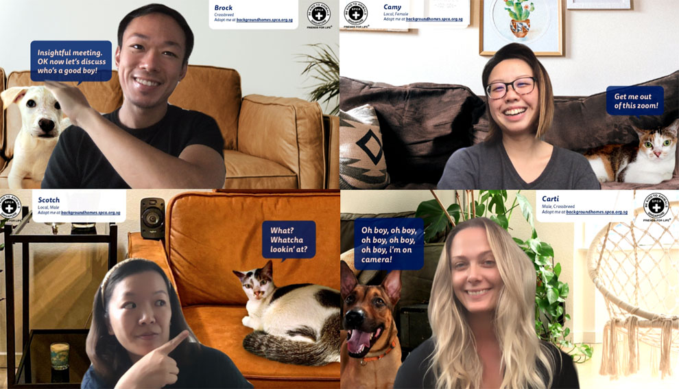 SPCA Singapore and Forsman&Bodenfors turn virtual backgrounds into virtual homes for shelter animals