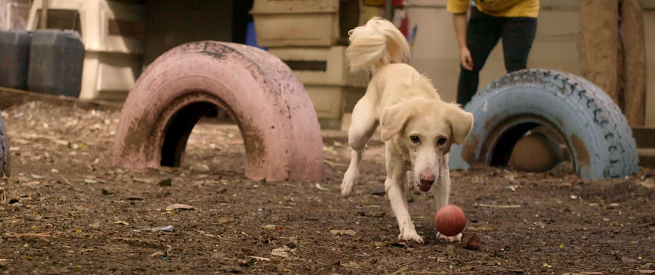 The Welfare Of Stray Dogs invites you to Adopt an Indie in new work via Another Idea India
