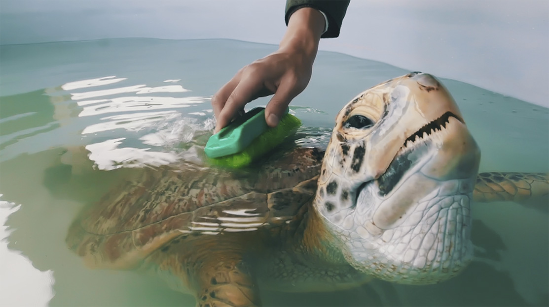 MediaMonks Shanghai launches the Sea Turtle Warriors campaign with WildAid