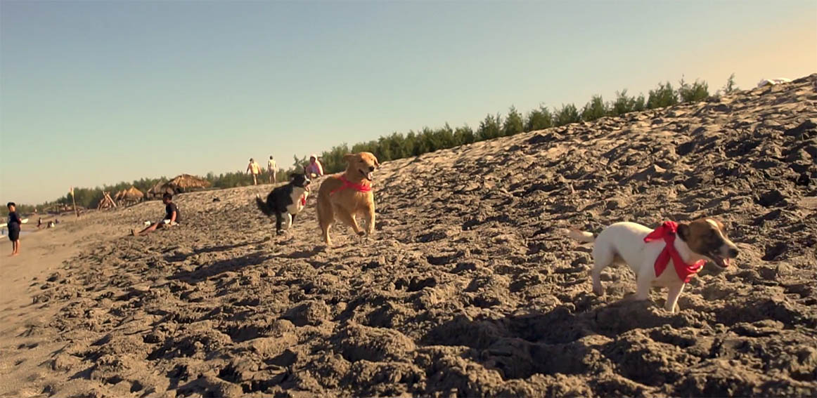 Wunderman Thompson Hong Kong releases dogs to detect beachgoers not using sunscreen in activation for Human Nature