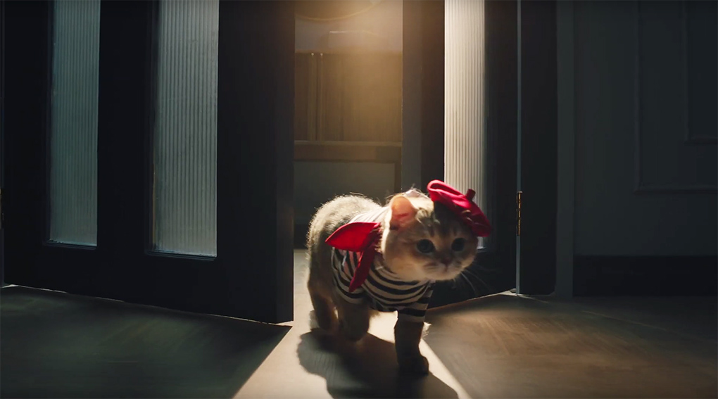 Cats star in new F5 Shanghai campaign to draw attention to the Midea Cube dehumidifier