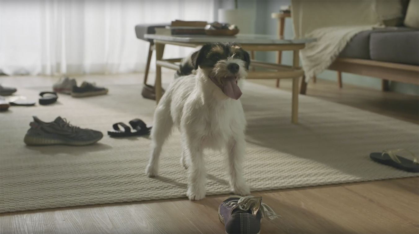 Wolf BKK Thailand and AP THAI's new film exposes what your dog gets up to when you're not there