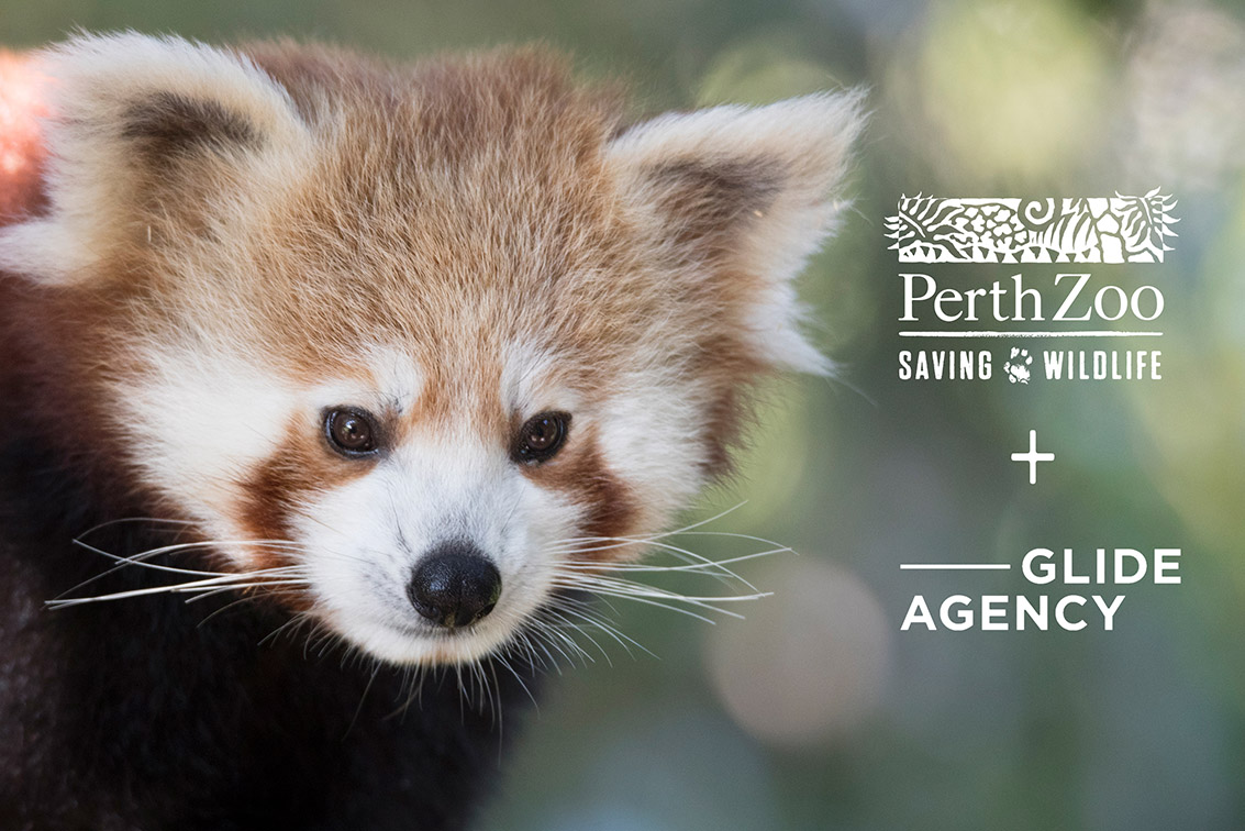 Glide Agency wins competitive pitch for Perth Zoo's digital strategy account