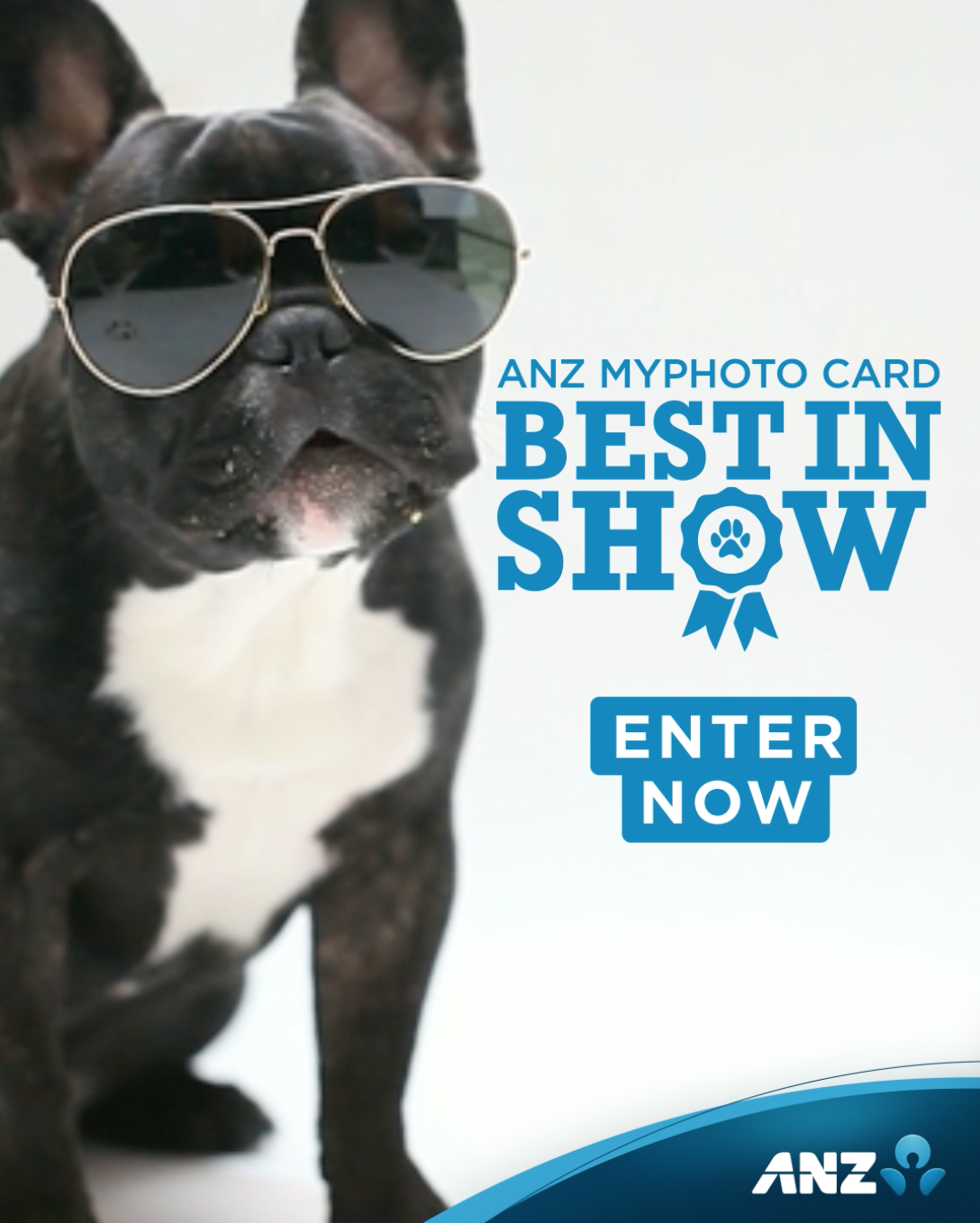 ANZ puts Kiwis' love of four-legged friends on display in newly launched campaign via TBWA NZ