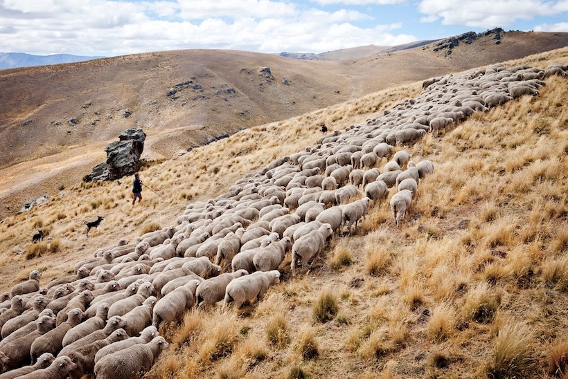 Heal the Earth: The unsung heroes of regenerative agriculture in New Zealand – A photographic exhibition by Camilla Rutherford